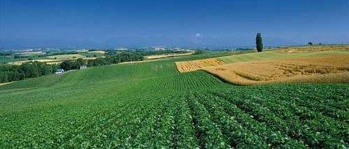 加快修订土地管理法,明确农村集体土地可以依法转让