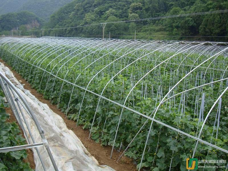 紫阳县推进现代农业园区规划建设 力保县域经济发展
