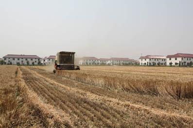 安徽利辛县坚持土地整治规划强力推进精准扶贫