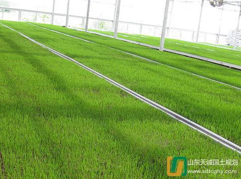如东县2016年申报千亿斤粮食项目建设扩大至4万亩