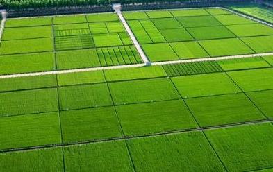 高标准基本农田建设项目可研、规划设计及预算编制