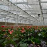 农业产业化经营项目