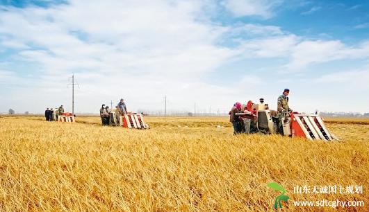 农业部发布关于促进现代畜禽种业发展的意见