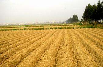 """""""新土地法""""呈四大亮点 保障粮食生产保护农民利益"""