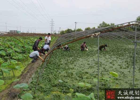 姜堰区深入推进示范性家庭农场服务联盟创建工作