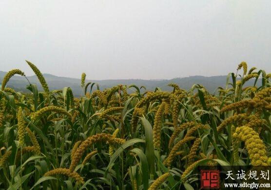 沂南县掀起农田水利建设高潮解决水利设施薄弱环节