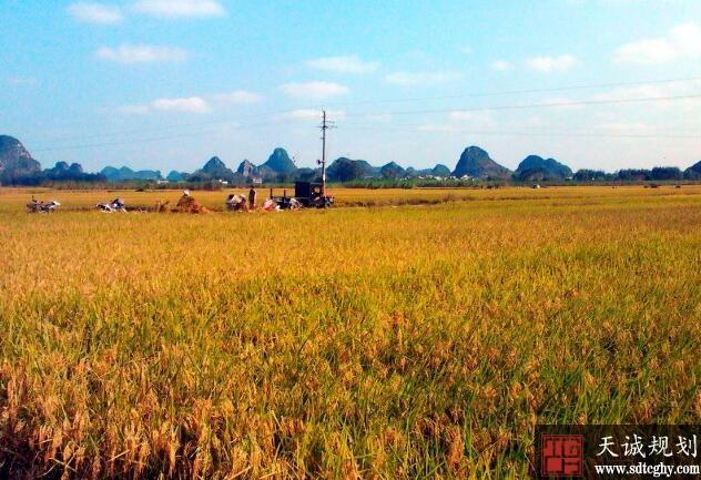 崇左市农土地流转提高土地效率促进现代农业发展