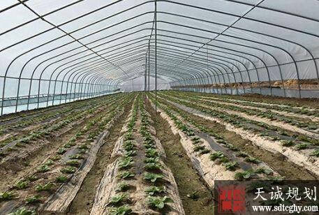 张掖家庭农场发展位全省第一 实现全年经济收入9.8亿元