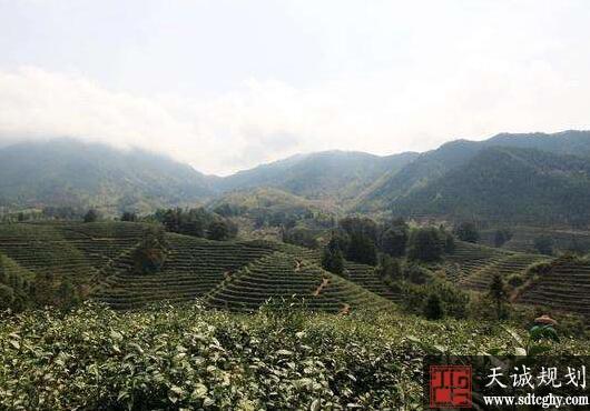 庆元县家庭农场发展为农村经济注入活力