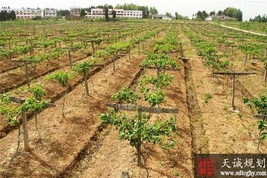 """青州市""""三权分置""""创新提高农村土地资源使用效率"""