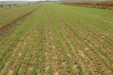 加快耕地保护新机制落地 加强永久基本农田保护
