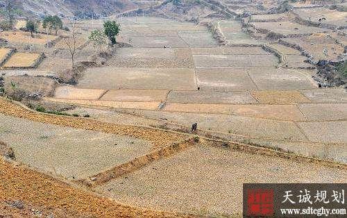 那坡县共发放农业支持保护补贴1633.56万元
