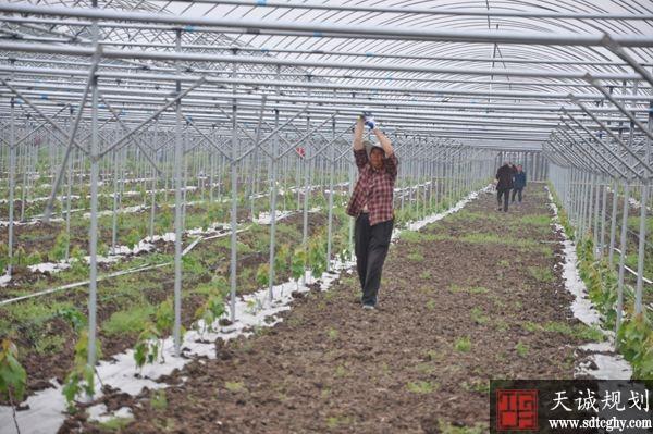 彭山区构建农村金融五大体系 催生农业农村发展新动能