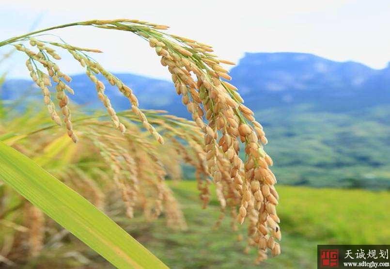 """""""红本本""""让农民更踏实的搞农业生产"""