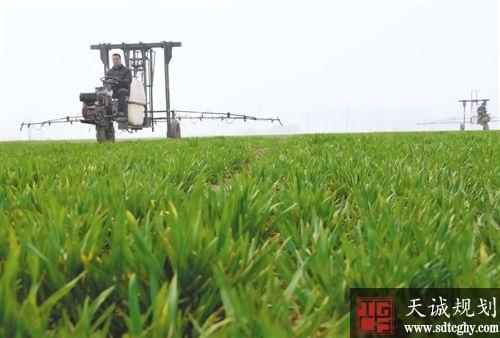 望都县农土地流转为农民开辟脱贫致富新思路