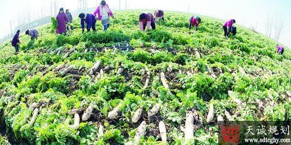 江苏鼓励高校毕业生办家庭农场 助力精准扶贫和乡村振兴