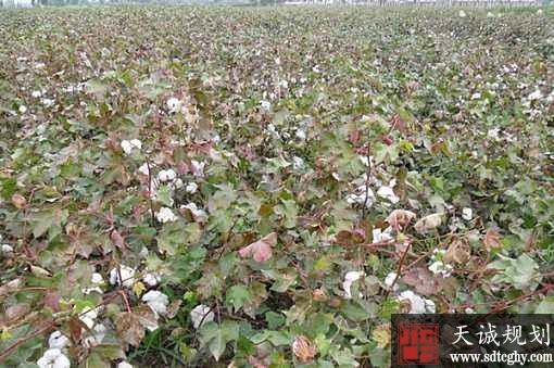 玛纳斯县多措并举推进土地流转提高农业效益致富农民