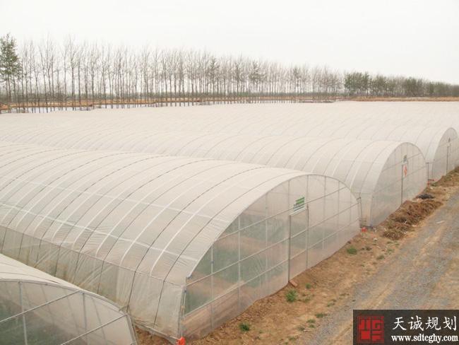 寿光市农土地流转让农民过上幸福生活