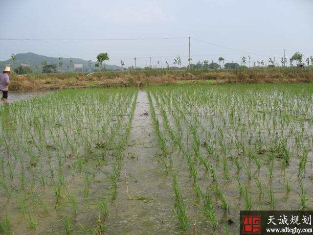 青原区农土地流转实现农户和企业双赢