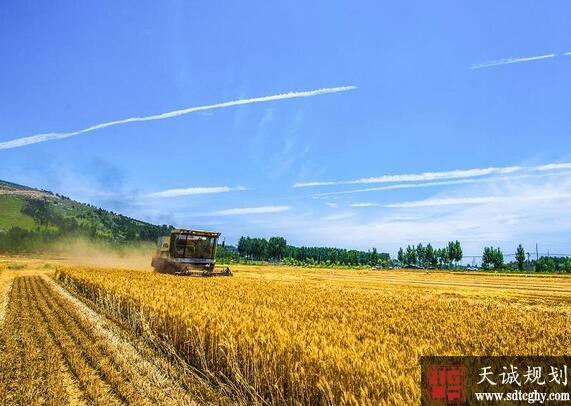 山东明确耕地保护工作目标 2020年耕地保有量不少于1.1288亿亩