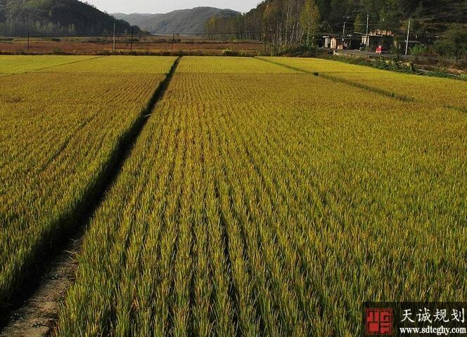 龙泉积极引导农土地流转盘活土地资源激发农村发展活力
