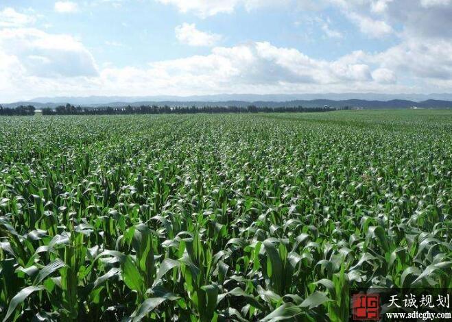 泸西县农土地流转接触土地对农民束缚并实现多元化就业