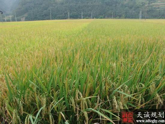 鸡鸣乡农土地确权颁证为明晰农村土地产权奠定基础
