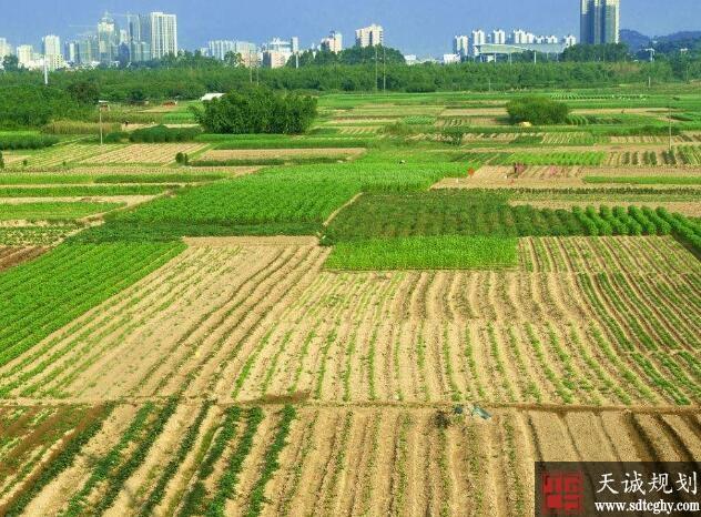 农村土地确股不确地 不种地收益反而增长