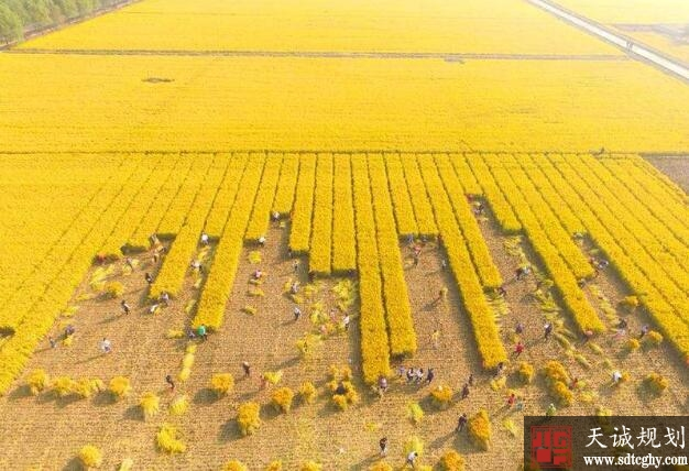 泗洪县农村产权抵押贷款激活沉睡资产带动农业发展