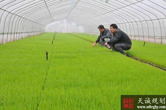监利县七千种粮大户和家庭农场主成为乡村发展生力军
