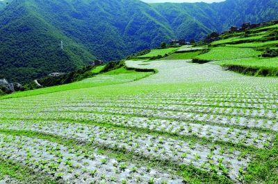 黑水县加快构建现代农业体系实现规模和效益同发展