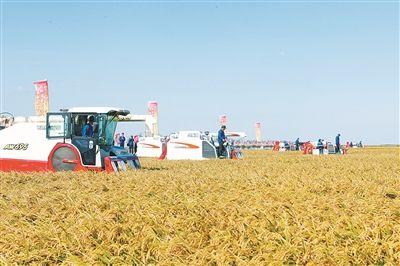 宁波市农土地流转推进乡村振兴步伐