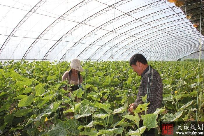 巴彦淖尔市农土地流转带动现代农业发展实现了农企双赢