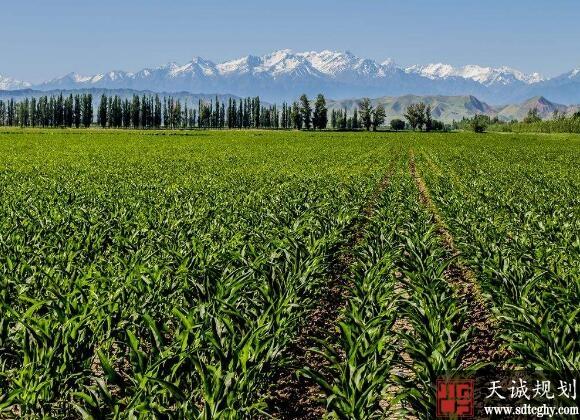 新疆农民抓住家庭农场机遇实现脱贫致富