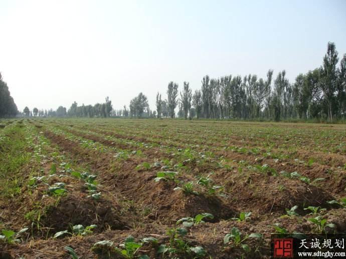 贺兰县多样化土地流转促农民脱贫致富