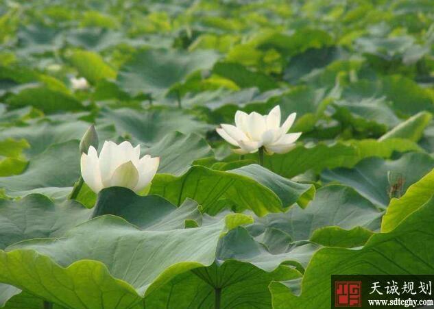 朱庄村农土地流转加快农业现代化发展提高农民受益水平