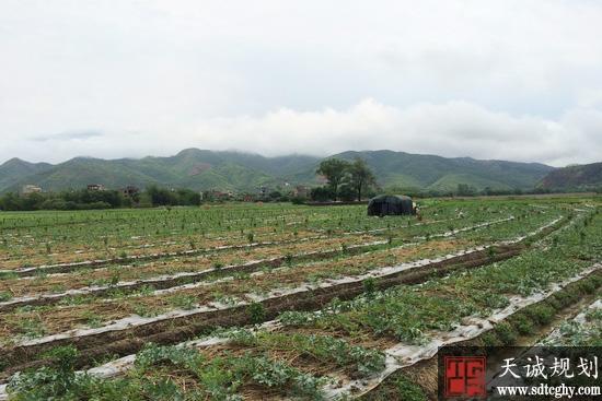 """梧州开展""""大棚房""""专项整治 退房还地恢复农业生产"""