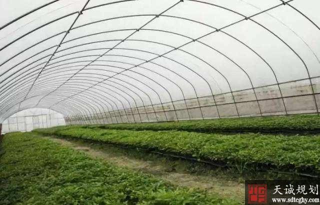 莘县农土地流转为农民转出一条幸福致富路