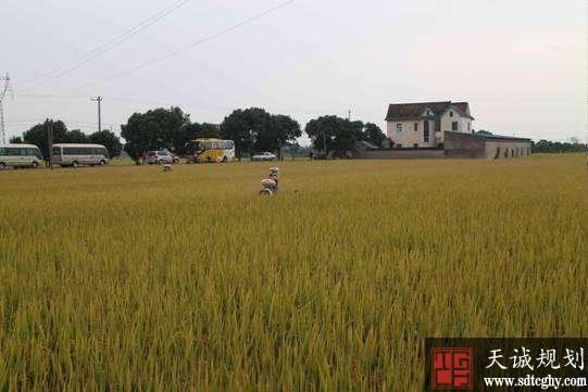 农土地流转租金入保险让农民吃下定心丸