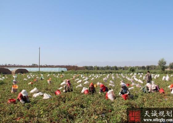 临泽县沙河镇登记认定家庭农场19家 带动周边农户1900余户