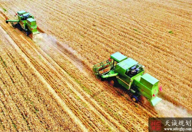 今年我国粮食播种面积稳定在16.5亿亩 产量要稳定在1.2万亿斤以上
