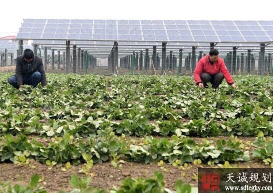 海门全省首单土地流转赔付的完成为农民利益添保障