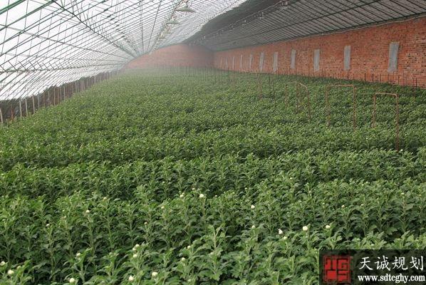 辽阳市大面积开展土地流转吸引城市资本投向农业