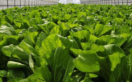 黑龙江绿色有机食品基地认证面积达8046万亩比上年增长5.4%