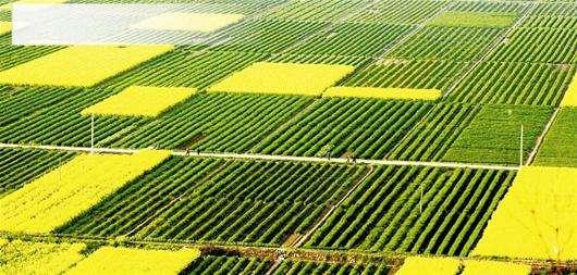 武穴市着力构建具有基层特色的耕地保护工作体系