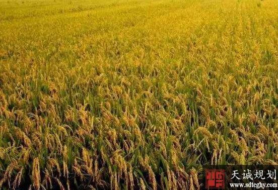 废弃宅基地复垦成高产量标准农田