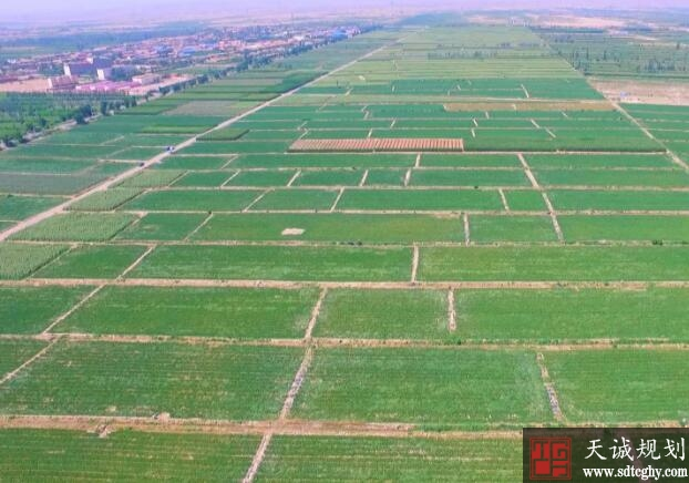 兰州新区紧抓高标准农田建设机遇促现代农业飞快发展
