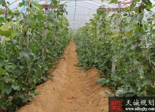 人行山东莒南县支行创新农村产权融资唤醒农村资产
