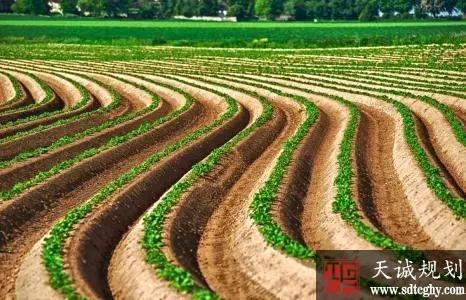 两会:妥善解决土地抛荒现象优化土地资源配置--刘永好