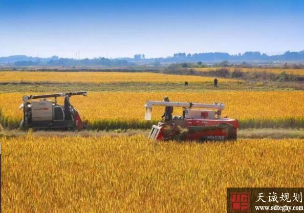 南京市预计发放8亿元耕地保护补贴到农民手中